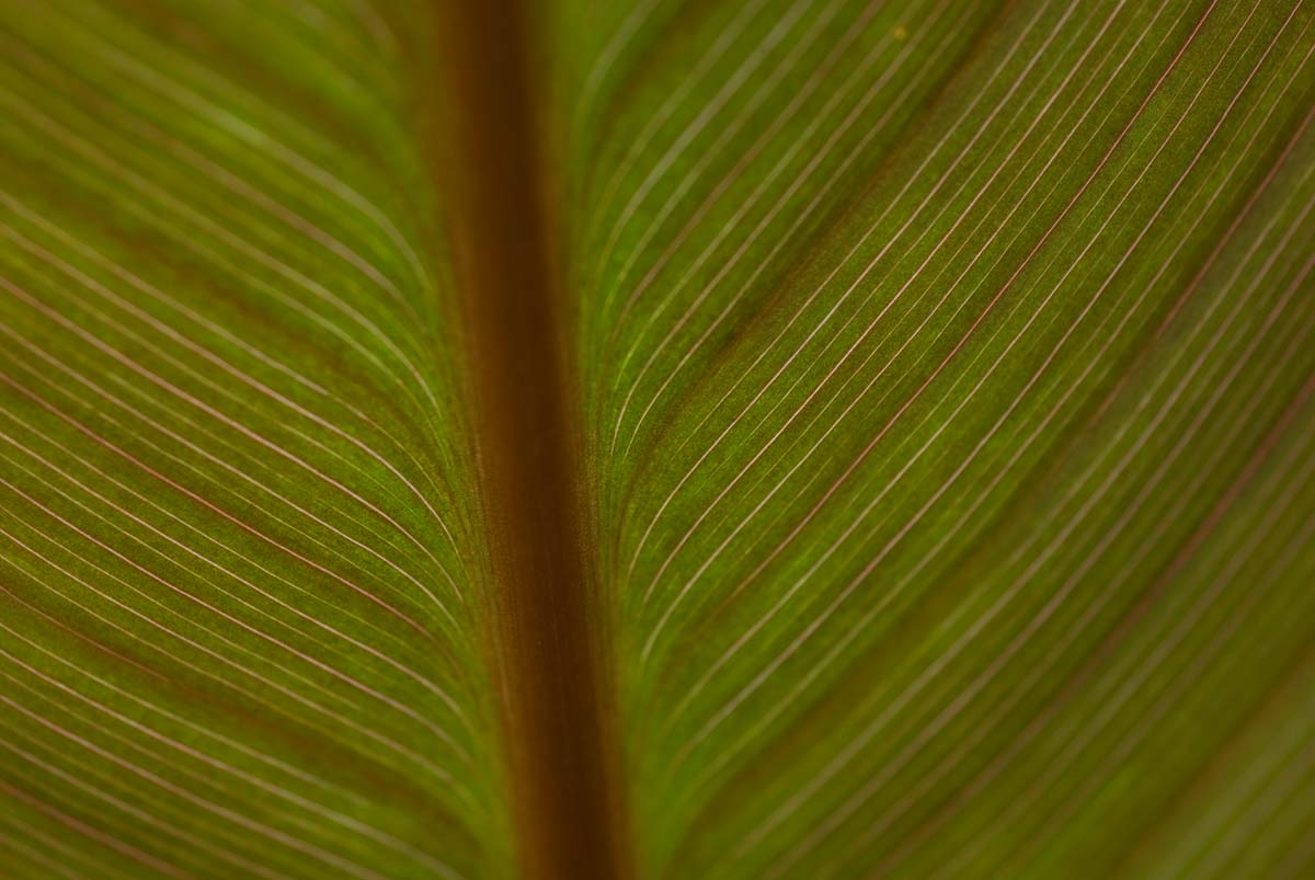 00-leaf_closeup