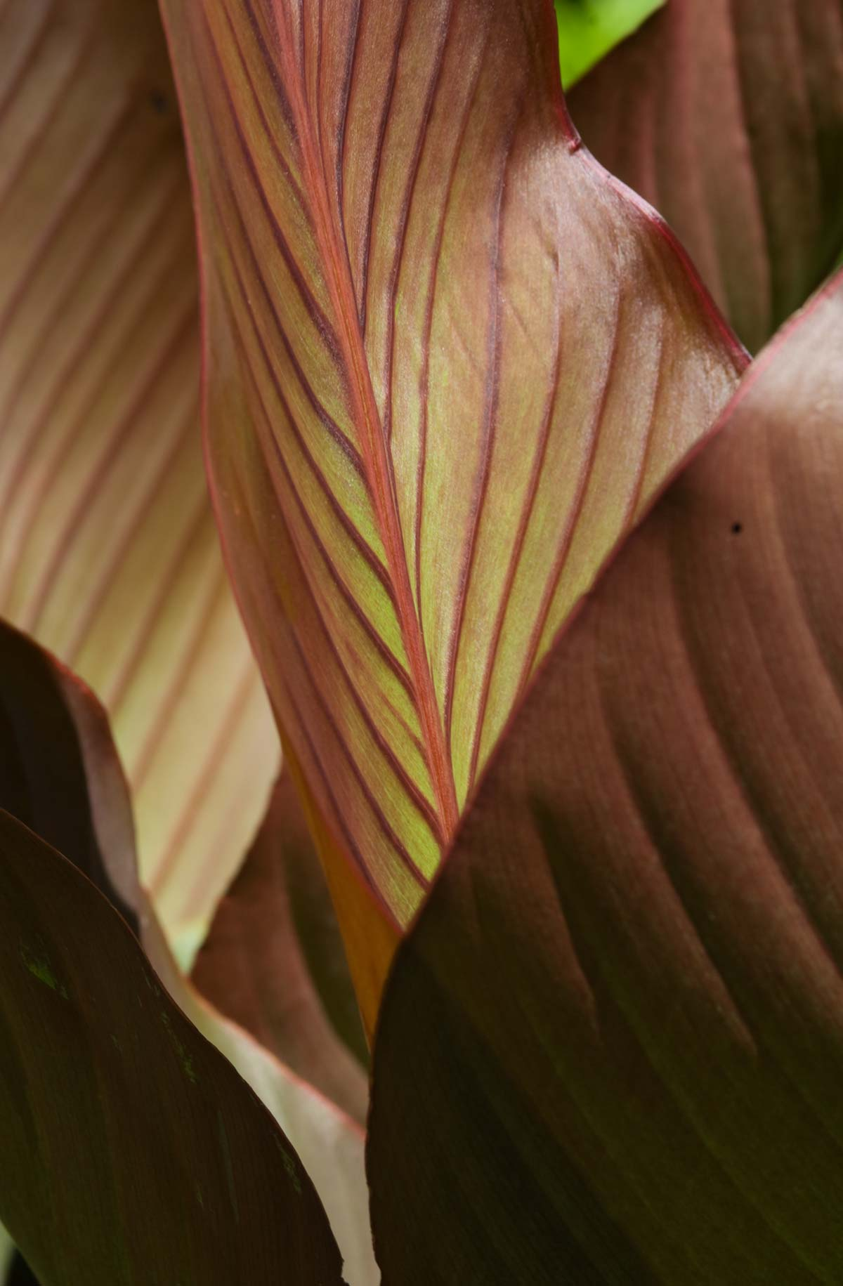 04-leaf_closeup2