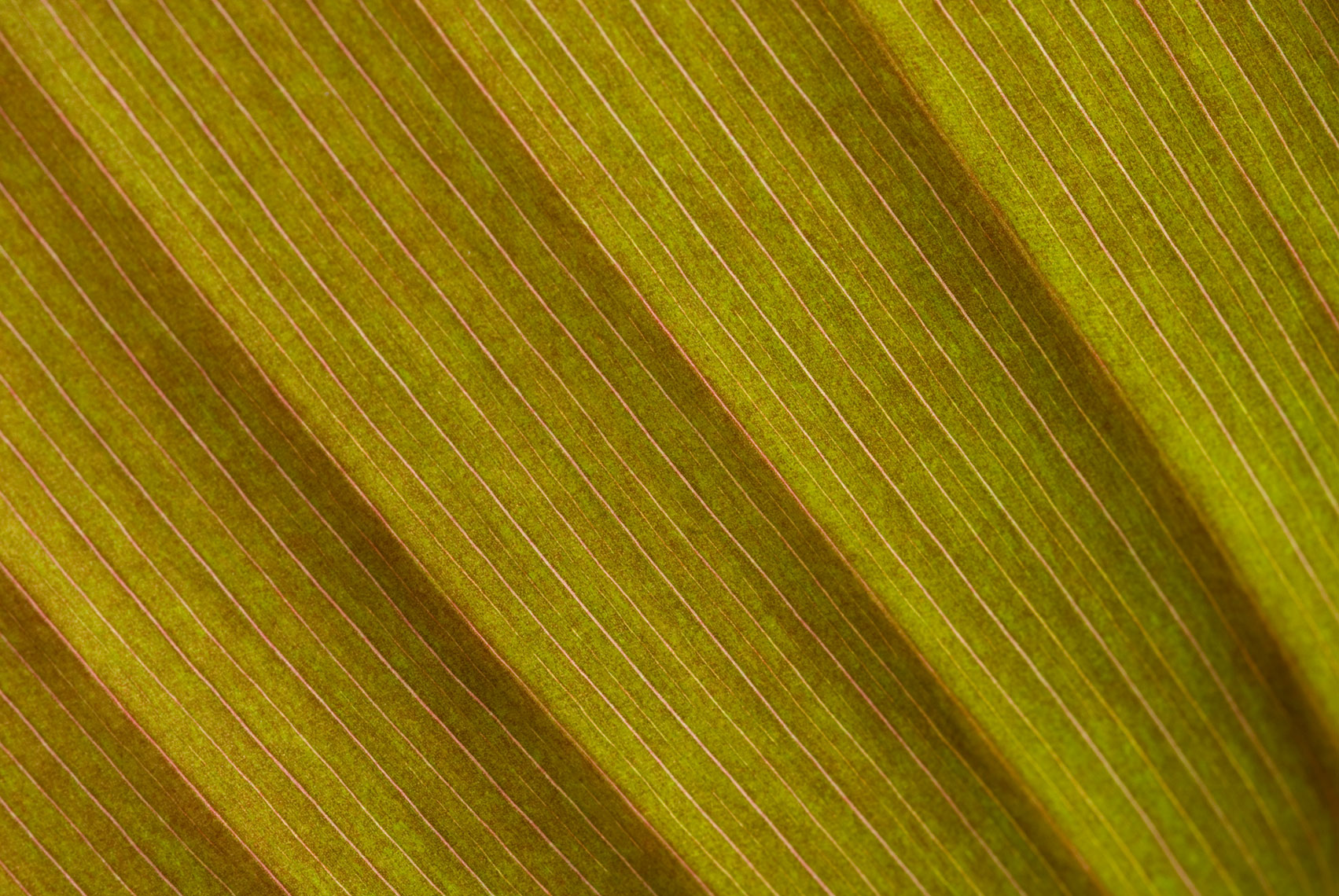 05-leaf_close_up